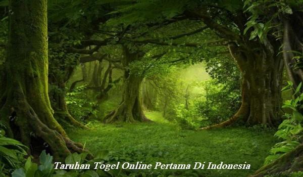 Taruhan Togel Online Pertama Di Indonesia